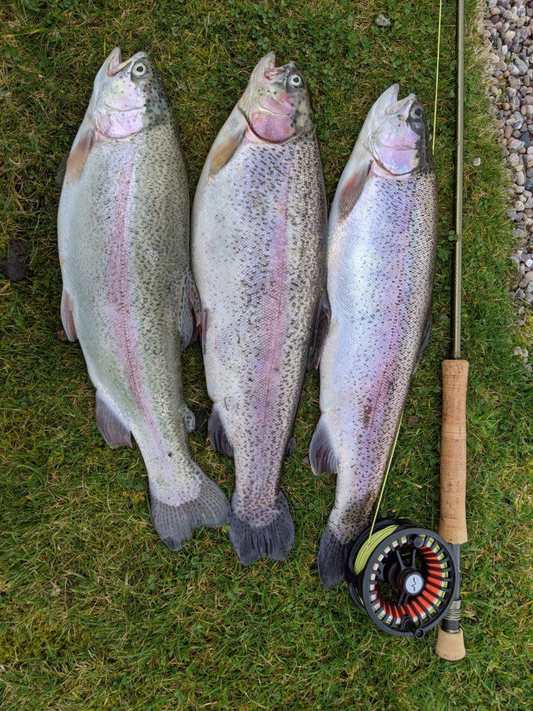 Pennine trout fishery