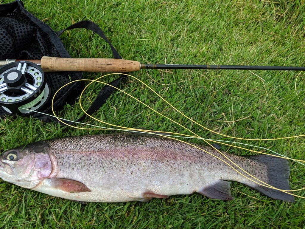 returning to fly fishing